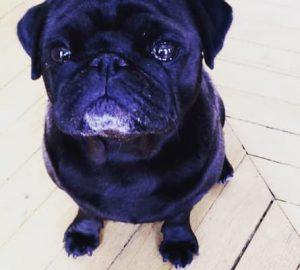 Jarry chien Youpi