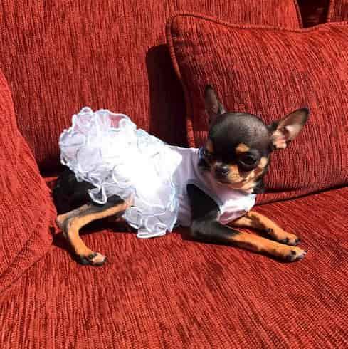 déguisement Halloween animaux Paris Hilton