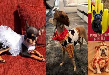 déguisements animaux costumes halloween célébrités