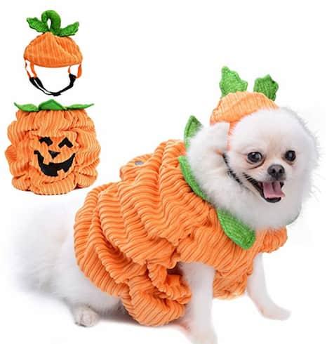 déguisement halloween animaux chien