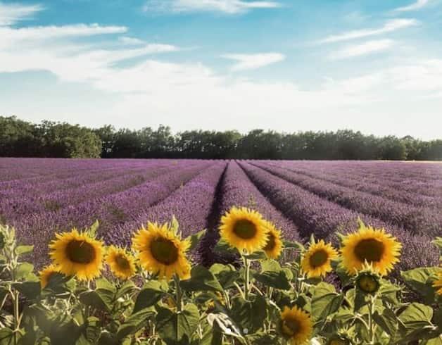 Où partir en France : les destinations iconiques à découvrir